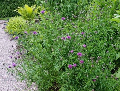 garden and bees