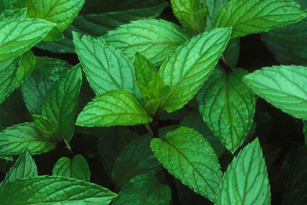 Green Girl Herbs & Healing | Blog