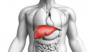 liver transplant cost in india