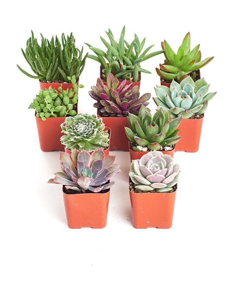 Succulents are great bridal shower ideas either as favors or game prizes