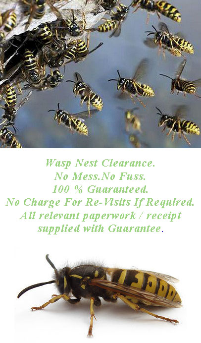 wasp removal from roof wolverhampton , wasps nest removal , wasps removal wolverhampton , Council Tenants Wasp Nest Removal