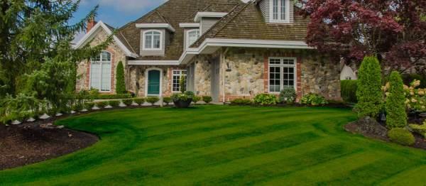 improve yard with lawn