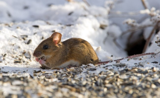 How Will The Mild Winter Affect Spring Pest Populations