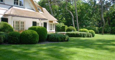 Ontwerp gras en buxus tuin