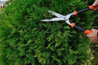 pruning-AdobeStock_57545728_medium