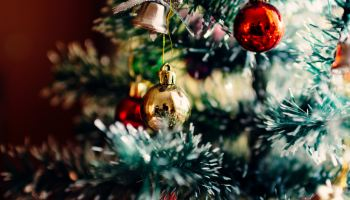How Green Is It… to get a real Christmas tree? – Green Living ...