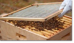 https://i0.wp.com/www.greenlivingnewsletter.com/_images15/bees.jpg