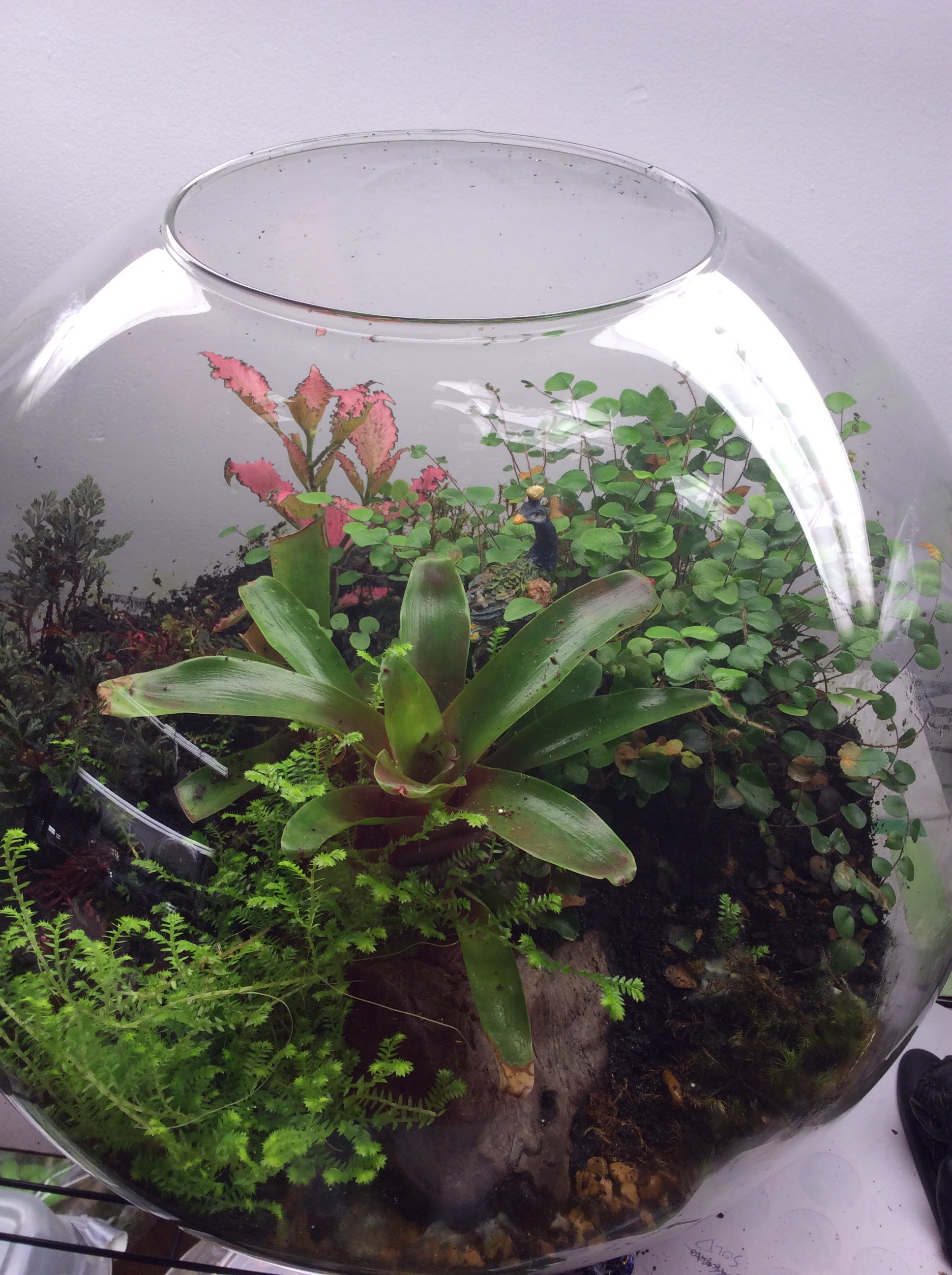 Build Your Own Terrarium Sunday June 12 Green Mansions Memphis