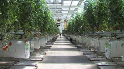 Emerald-Health-Takes-Cannabis-Industry-by-Storm-400x225.jpg?fit=400%2C225&ssl=1