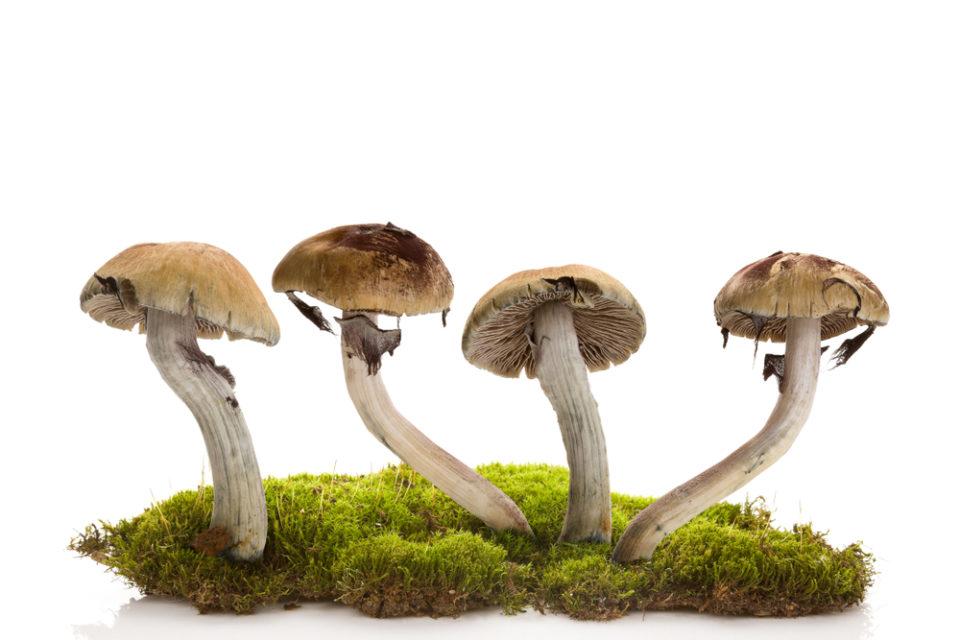 mushroom.jpg?fit=960%2C640&ssl=1