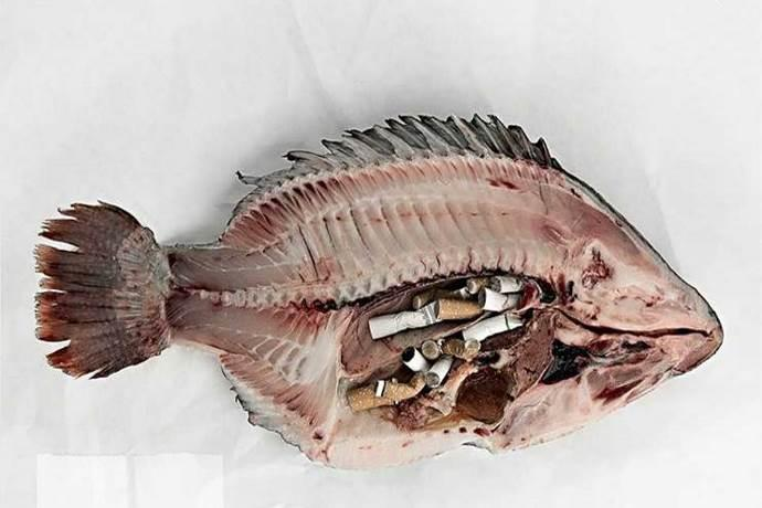 mozziconi-sigaretta nei pesci