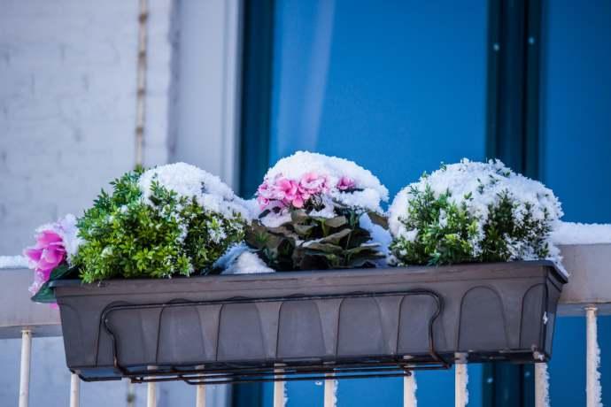 Come Proteggere Dal Gelo Le Piante Del Terrazzo O Balcone