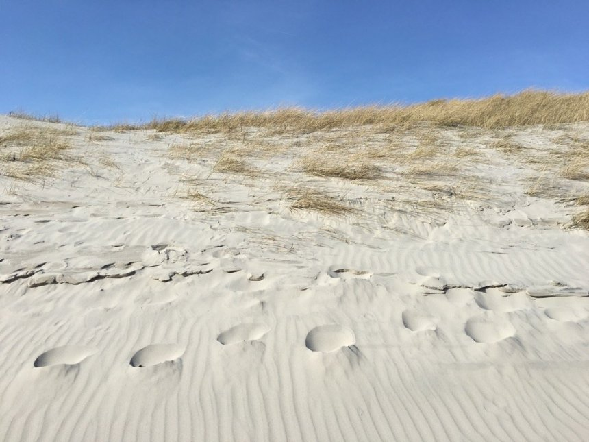 Bergwaldprojekt Amrum - Sand Dunes | GreenMe Berlin on the road