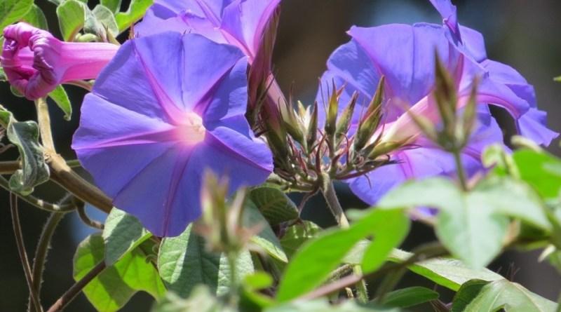 Nilgiri Flora