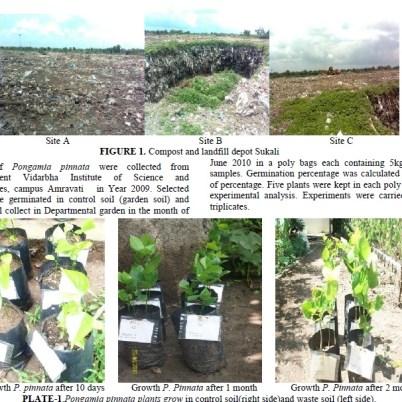Reclaiming Landfills by Pogamia Pinnata- Wonder-Plant