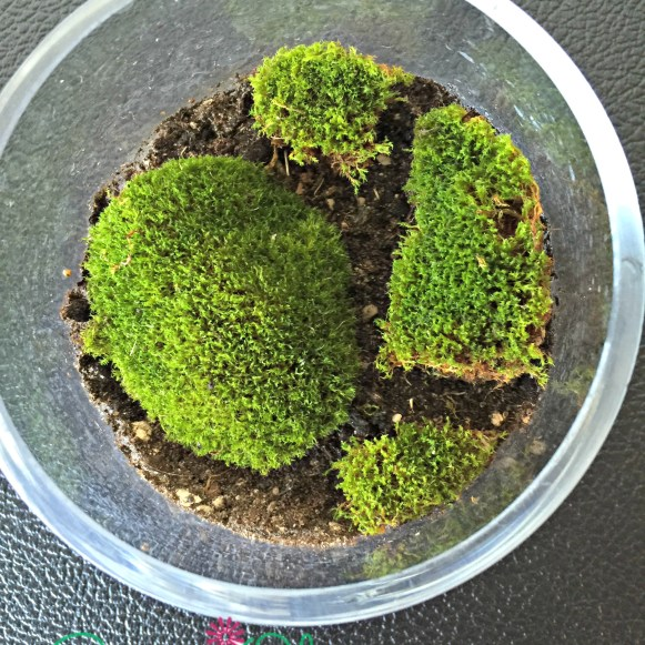 Moss in open container