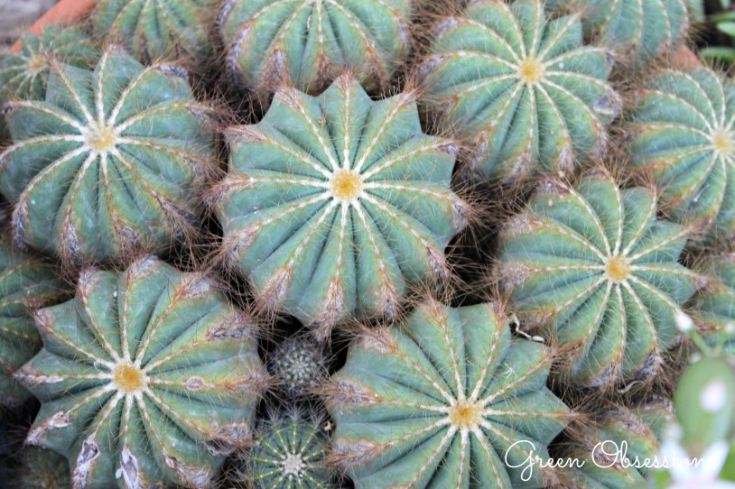 cacti3