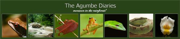 Agumbe Diaries