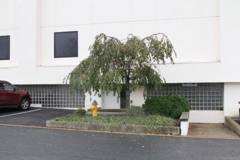 A wind ruffled tree