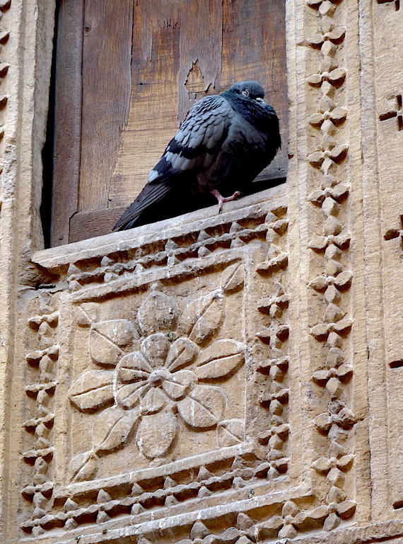 A pigeon naps inside an ornate cubbyhole in the vicinity of Jaisalmer's Golden Fort