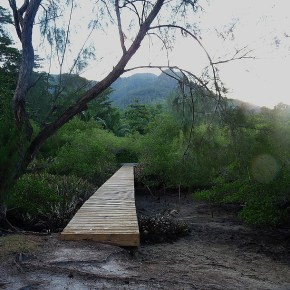 Seychelles Diaries – Morning in the mangroves