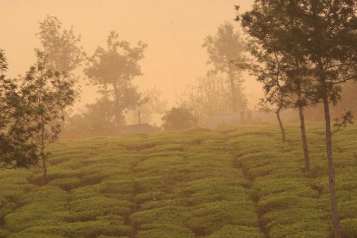 Evening at the tea garden in Valparai