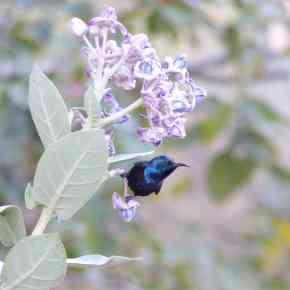 Manchanabele – Birding in Bangalore's extended backyard