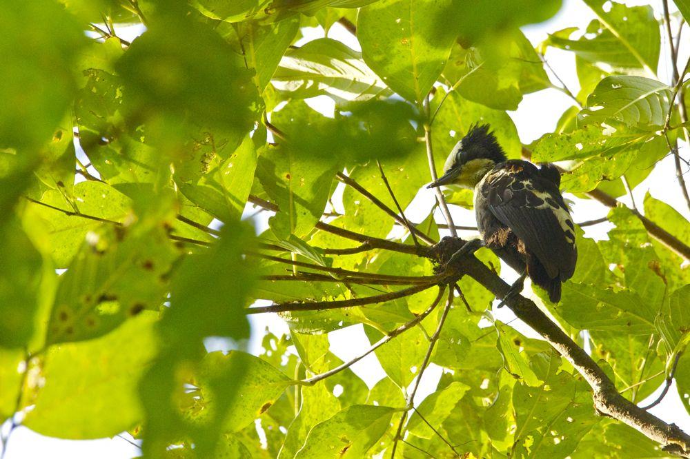 Birding at Karnala