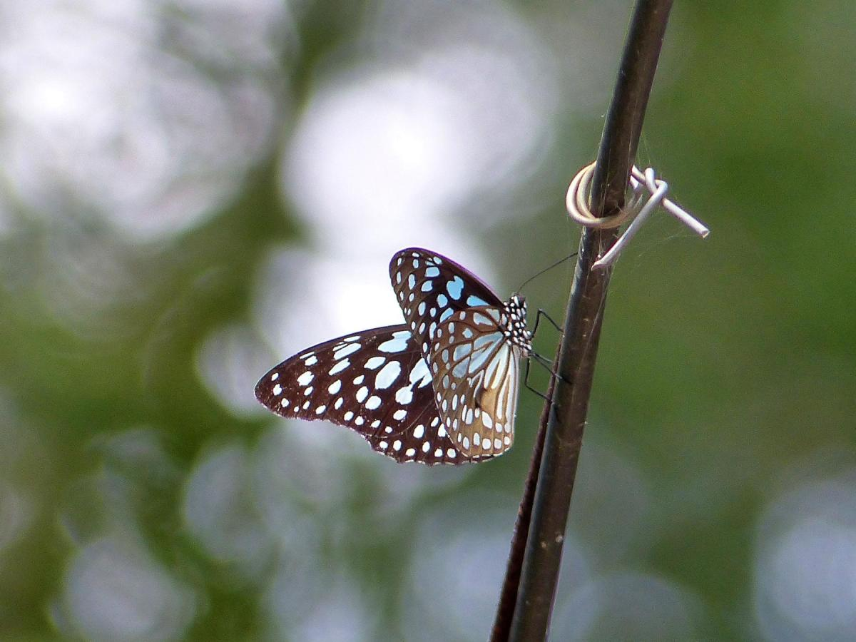 Watching Butterflies – Field Lessons from Rishi Valley