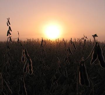 biofuel-crop1