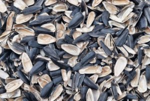 Sunflower Seed Husks