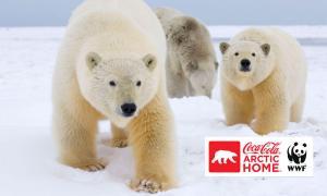 polarbear-coke2