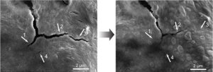 self-healed-electrodes.jpg.492x0_q85_crop-smart