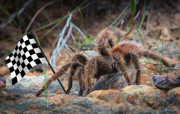 Fast-tarantulas Climate change