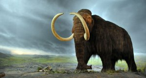 Woolly mammoth de-extinction
