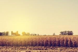 hydrogen-corn-waste