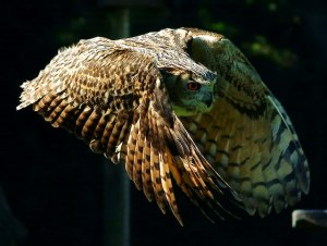 Owls hold key to quiet wind farms