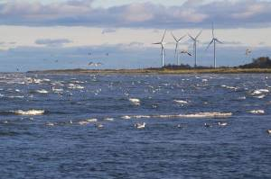 denmark_wind_power_jpg_662x0_q70_crop-scale