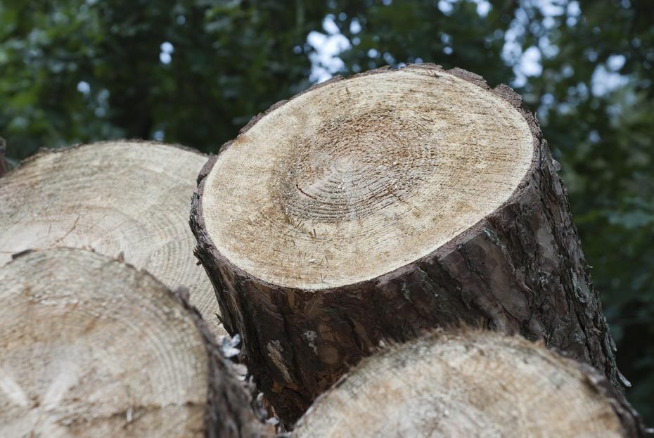 BOMOL, het beste voor hout….