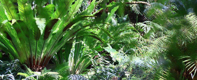 Green Parrot Gardens | Automatic Irrigation| Asplenium (Fern)