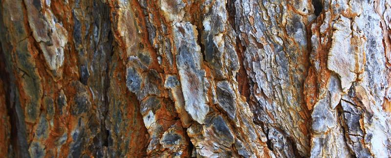Green Parrot Gardens | Creative Approach | Pine Bark