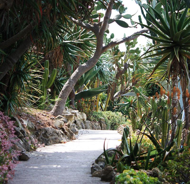 Green Parrot Gardens | Garden Design | Succulent and Desert Garden