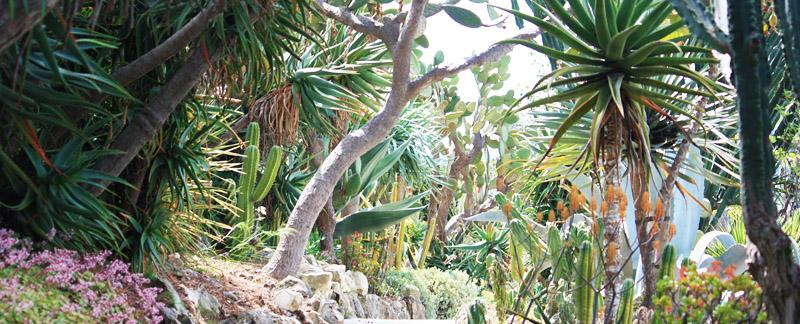 Green Parrot Gardens | Low Maintenance Gardens | Succulent Garden