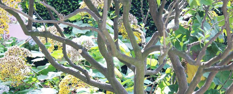 Green Parrot Gardens | Our Profile | High Quality Garden Maintenance near St Tropez