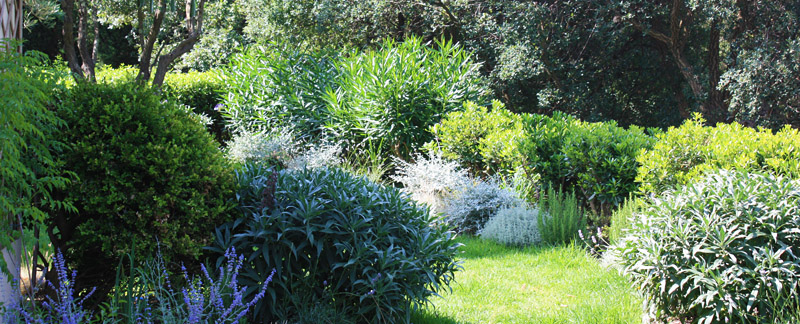 Green Parrot Gardens | Idea Development | Dense planting in a woodland garden near St. Tropez