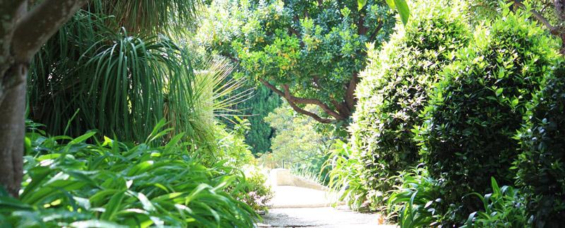 Green Parrot Gardens   Successful Planning   Lush Planting Scheme in a Garden near St Tropez