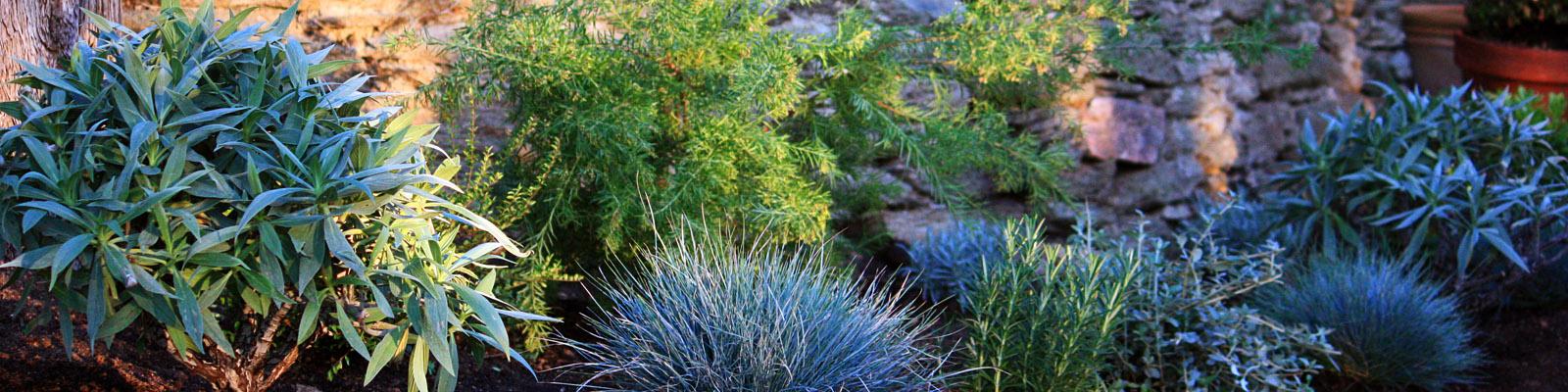 Green Parrot Gardens | Your Garden Style | Classic Mediterranean Garden