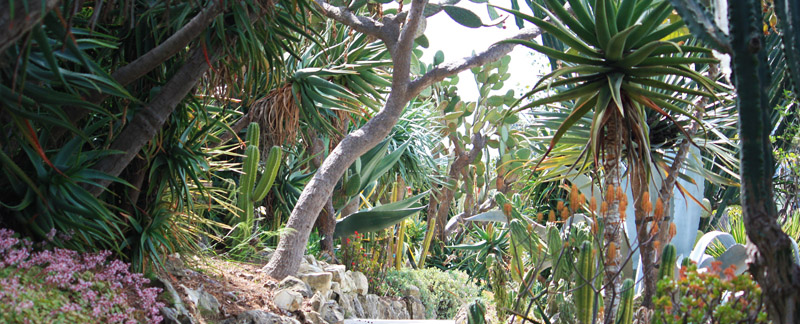 Green Parrot Gardens | Profile | An exotic low maintenance garden in Grimaud, French Riviera