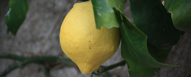 Lemontree in Antibes