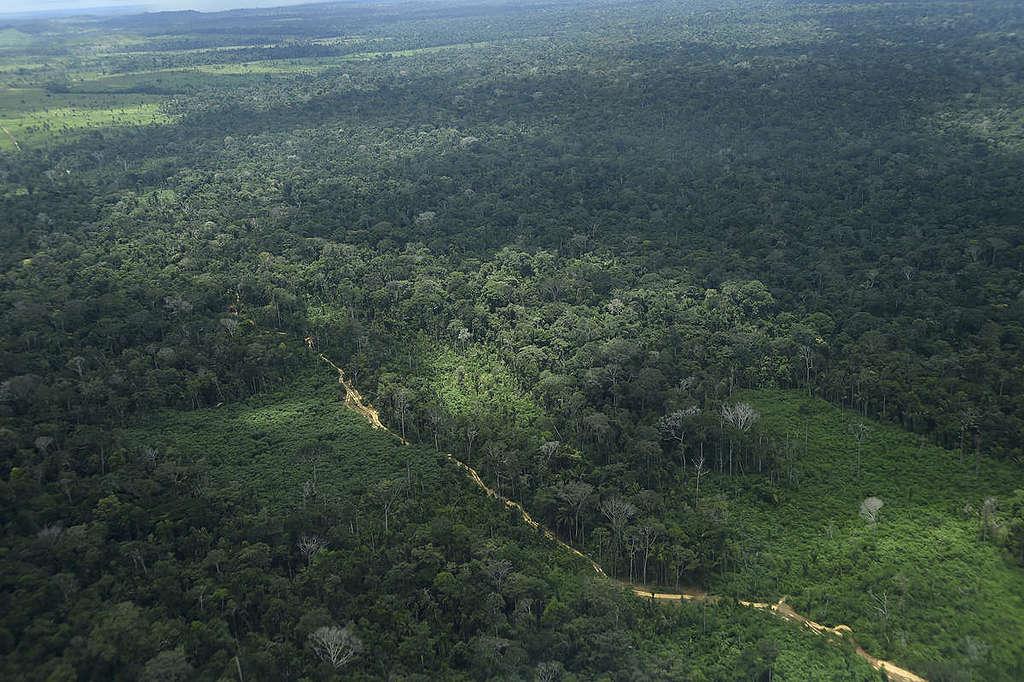 【世界森林日】光種樹就能減緩氣候變遷?不用了謝謝! - Greenpeace 綠色和平 | 臺灣